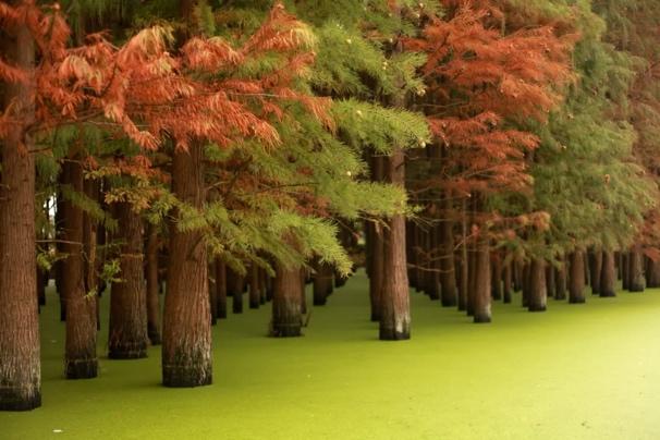 一棵大树  描述已自动生成